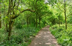 Footpath through typical British deciduous woodland stock image
