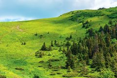 Footpath up the hill in summer. Beautiful nature scenery on a sunny day. coniferous forest on the slope. hiking tourism background. goal achievement concept stock images