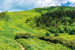 Footpath up the hill in summer. Beautiful nature scenery on a sunny day. coniferous forest on the slope. hiking tourism background. goal achievement concept stock image