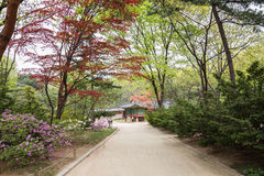 Footpath and verdant trees at the Jongmyo Shrine in Seoul Stock Images
