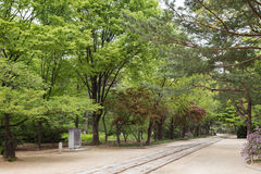 Footpath and verdant trees at the Jongmyo Shrine in Seoul Royalty Free Stock Photography