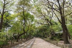 Footpath and verdant trees at the Jongmyo Shrine in Seoul Royalty Free Stock Photos