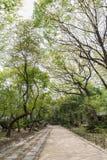 Footpath and verdant trees at the Jongmyo Shrine in Seoul Royalty Free Stock Photo
