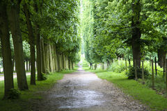 Footpath in versailles royalty free stock images