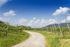 Footpath through vineyard landscape Royalty Free Stock Images