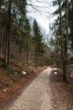 Footpath at Vorderer Langbathsee in Salzkammergut, Austria Royalty Free Stock Photo