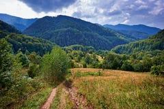Footpath w lesie Obrazy Royalty Free