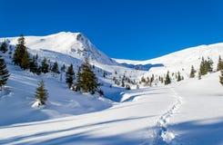 Footpath w śniegu zdjęcie stock