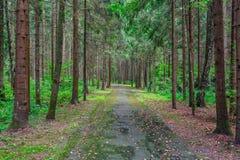 Footpath wśród drzew w lesie Zdjęcie Stock