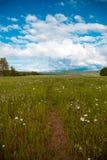 Footpath w rumianku polu Zdjęcia Stock