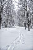 Footpath w snowed lesie Obrazy Stock