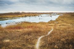 A footpath through a wetland nature preserve. In early winter near Toronto, Ontario stock image