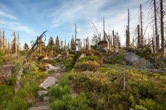 Footpath Through Wild Forest in Sumava Mountain Range Nature Reserve Royalty Free Stock Photography