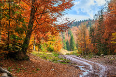 Footpath winding through colorful forest Royalty Free Stock Photo