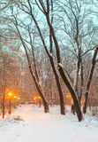 Footpath in winter city park Stock Image