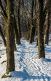 Footpath in winter forest. Empty footpath in winter forest Royalty Free Stock Photography