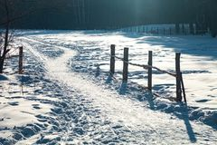 Footpath in the winter forest in sunny frosty day. Footpath in the winter pine forest in sunny frosty day royalty free stock image