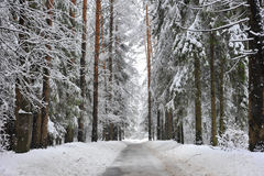 Footpath in winter snowy forest Royalty Free Stock Photos