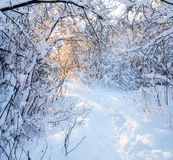 Footpath in winter wood. Royalty Free Stock Photos