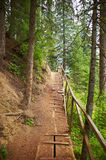 Footpath in wood Royalty Free Stock Photos