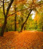 Footpath and a wooden bench in a park in autumn stock photography