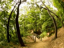 Footpath with wooden bridge through a mysterious forest. Fisheye image
