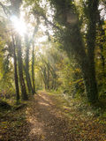 Footpath. In woodland in autumn Royalty Free Stock Image