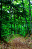 Footpath in the woods Royalty Free Stock Images