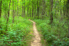 Footpath in the woods Stock Photography