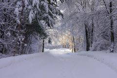 Footpath in the Woods after Beautiful Frosty Snowfall stock photos