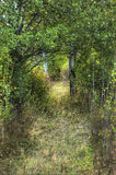 Footpath in the woods. Stock Photo