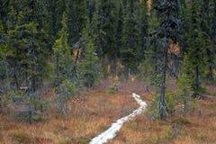Footpath Z Drewnianymi deskami w tajdze, Finlandia Obrazy Stock