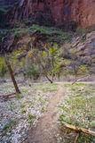 Footpath in Zion Canyon Stock Images