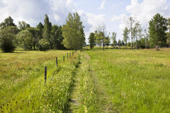 Footpaths on a meadow Royalty Free Stock Image