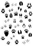Footpints animales fijados Imagen de archivo libre de regalías