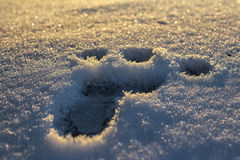 footprint Zdjęcia Royalty Free