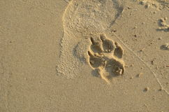 footprint Obraz Royalty Free