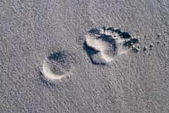Footprint Royalty Free Stock Photos