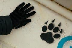 Footprint of an animal Stock Photo