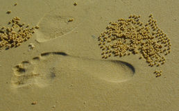 Footprint on Australian beach Stock Image