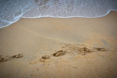 Footprint on a beach Stock Photography