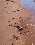 Footprints on beach Stock Image