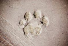 Footprint of a bear Stock Photography