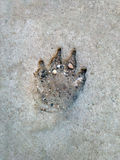 Footprint on cement Royalty Free Stock Images