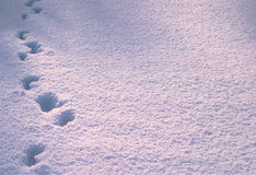 Footprint in deep snow Stock Photos