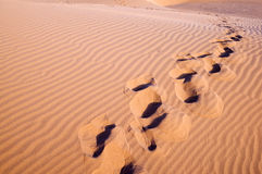 Footprint on the desert Royalty Free Stock Photo