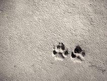 Footprint of dog Stock Photos