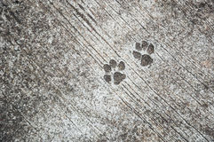 The footprint of dog on the concrete rough floor or ground Royalty Free Stock Photos