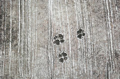 The footprint of dog on the concrete rough floor or ground Stock Image