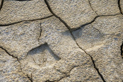 Footprint in dried earth Stock Images
